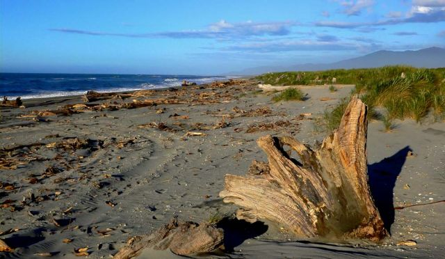 Der Haast Beach - Southwest New Zealand World Heritage Area