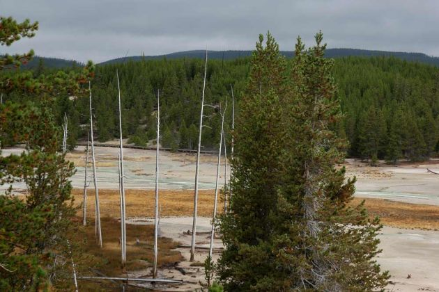 Norris Geyser Basin, Porcelain Terrace Overlook - Yellowstone National Park, Wyoming