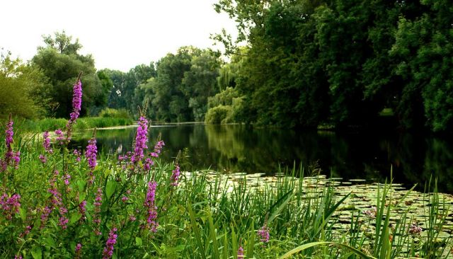 Der Luther See in Wunstorf-Luthe, Region Hannover